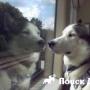 Собаки будут одни ездить в поездах