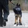 В Австрии обули собак