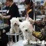 В Сочи состоится выставка собак