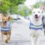 Дворовые собаки будут охранять Бангкок