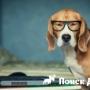 Интеллект собак оказался таким же как у других животных
