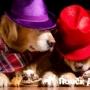 В Барселоне открылась пивная для собак