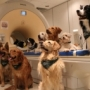 Ученые подтвердили умение собак понимать слова