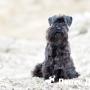 В Одессе прошёл конкурс красоты для собак