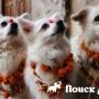 В Непале отпраздновали День собак