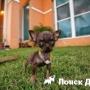 Ученые нашли самую маленькую собаку