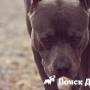 Ученые установили осознанное непонимание собак