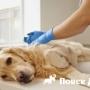 В Португалии запретили усыплять собак