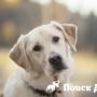 В Китае создали исследовательскую базу для собак