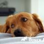 Ученые выяснили что собаки понимают человеческую речь