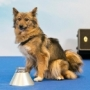 В России ввели новую породу собак