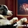 Собаки перестанут бояться грохота салютов