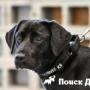 ЦРУ вживляло чипы в мозг собак для специальной разведки