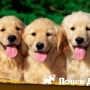 Россияне назвали популярные клички собак