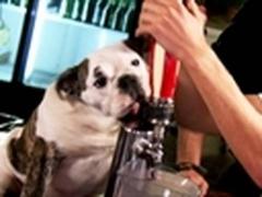 Собака-бармен