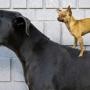 Большие собаки оказались умнее маленьких