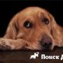 Во Франции собакам запретили лаять