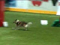 Аджилити. Чемпионат мира 2007 (Часть 4)