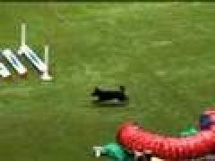 Аджилити. Чемпионат мира 2007 (Часть 3)
