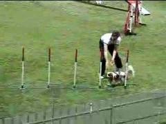 Аджилити. Чемпионат мира 2007 (Часть 2)