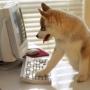 Оформление покупки щенка
