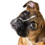 Для чего нужен договор купли-продажи щенка