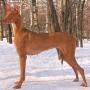 Выставочные регалии собаки: баллы, титулы, классы