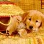 Обучение щенка с первых дней появления в вашем доме