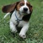 Методы обучения и поощрения щенка