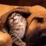 Как кошки с собаками…