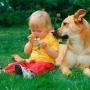 Собака и появление ребенка