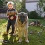 Собачья территория и ее защита