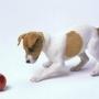 Игра необходима собаке