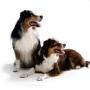 Индивидуальность собаки и методы дрессировки