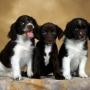 Язык поз и движений собак