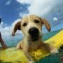 10 главных принципов обучения собак