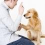 Как дрессировать собаку (психология обучения)