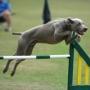 Мотивация собак