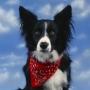 Лучшие собачьи породы мира