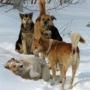 Десятки бродячих собак в Москве помещены ветеринарами на карантин