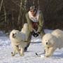 В Санкт-Петербурге прошли гонки на собаках