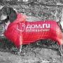 Собаки-промоутеры