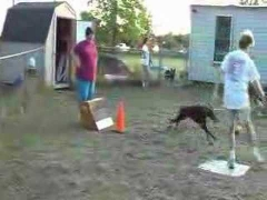 Тренировка по флайболу