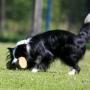 Учим собаку приносить апорт