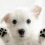 Как наказывать собаку в кликер-дрессировке?