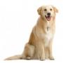 Как научить собаку сидеть с помощью кликера?