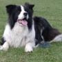 Как научить собаку лежать (метод кликера)