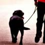 Как с помощью кликера отучить собаку тянуть поводок
