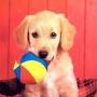 О чем нужно знать хозяину щенка, чтобы тот вырос здоровой собак