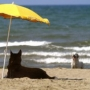 Римские каникулы на собачьем пляже